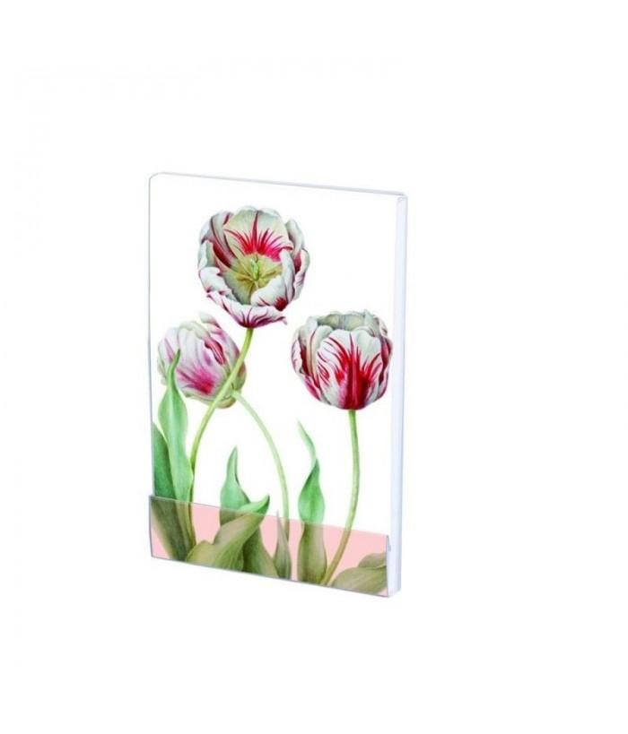 Carnet notite A7 Tulipa 'Teyler', Anita